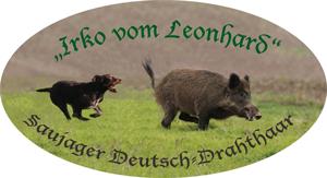 """Saujäger Deutsch-Drahthaar """"Irko vom Leonhard"""""""